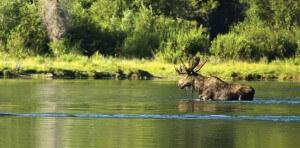Jackson Hole Wildlife Watching
