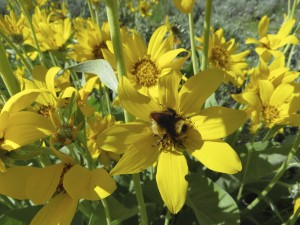 wildflowers in jackson hole