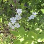 Jackson-Hole-Wildflowers-3